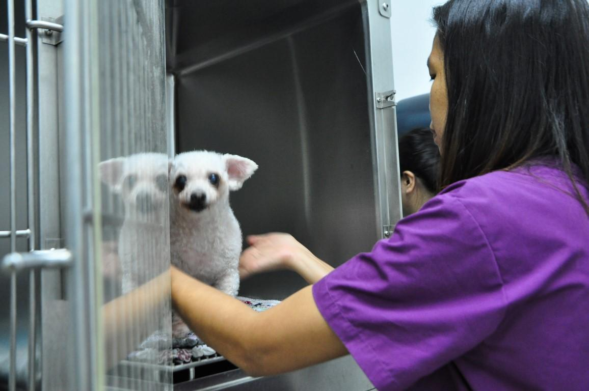 kovan-veterinary-small-dog