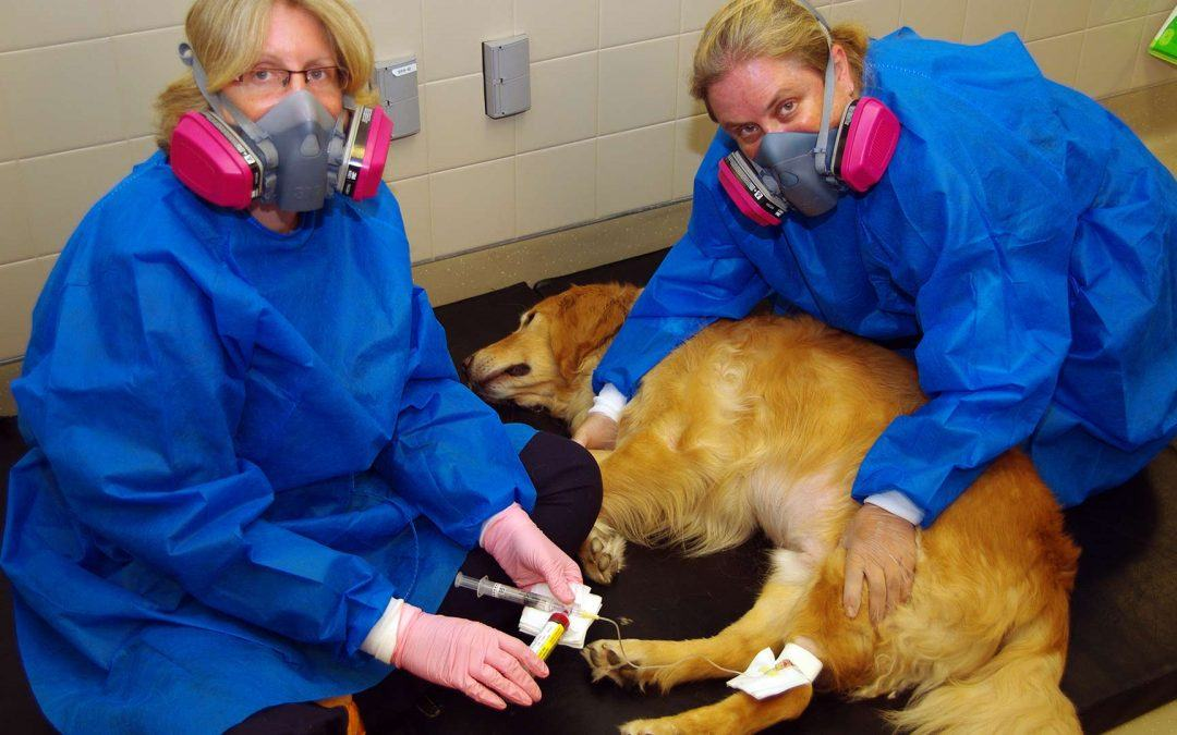 Oral Chemotherapy for Pets is Not a Reliable Substitute for Traditional Chemo