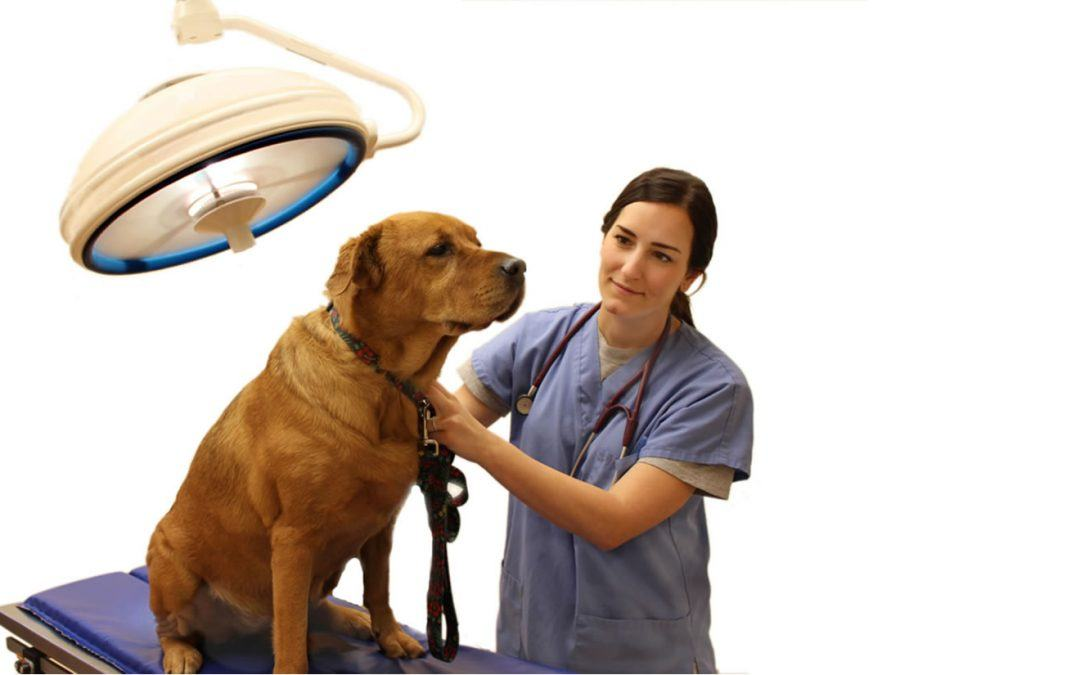 Finding the Right Veterinarian – For Your Pet AND for You