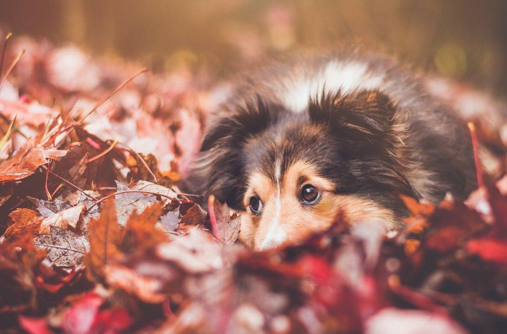 Post-Election Stress and Therapy Dogs