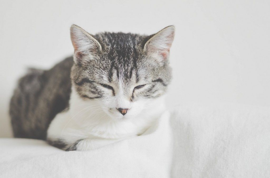 New Jersey Assembly Panel Approves Cat Declawing Ban
