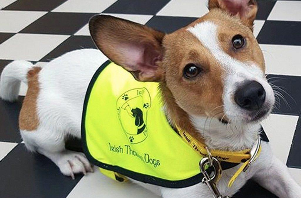 How a Therapy Dog-in-Training is Helping Kids Cope at the Dentist