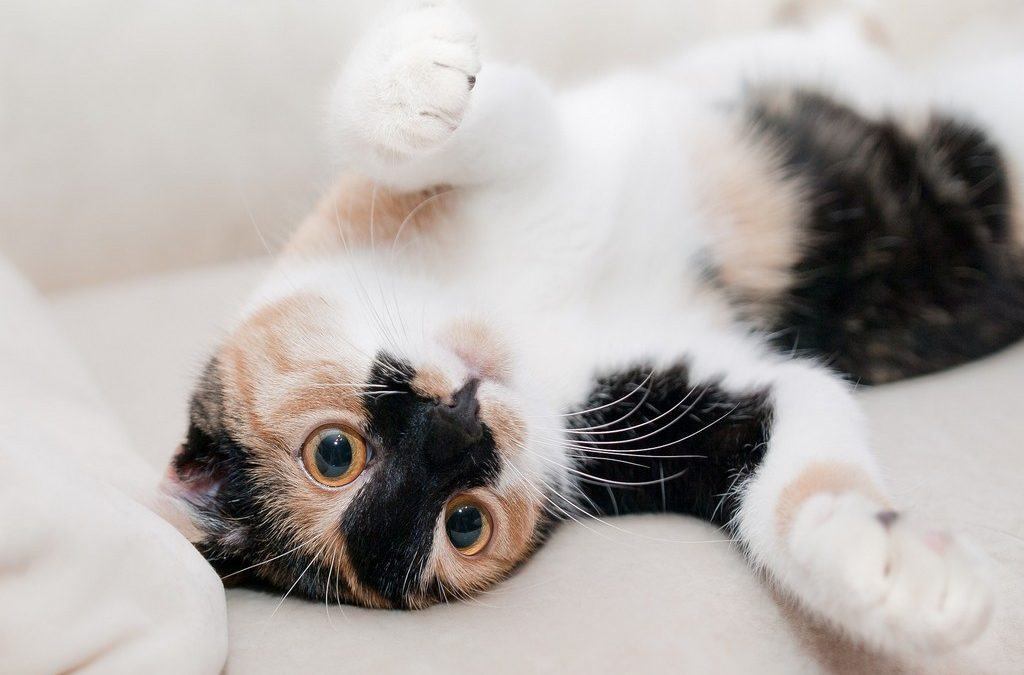 Which Personality Does Your Cat Have?