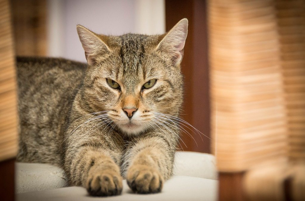 Study Finds That Cats Actually Love Interacting With Humans
