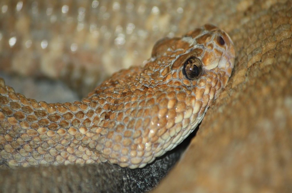 Tragedy at Zoo Knoxville: 33 Reptiles Unexpectedly Die