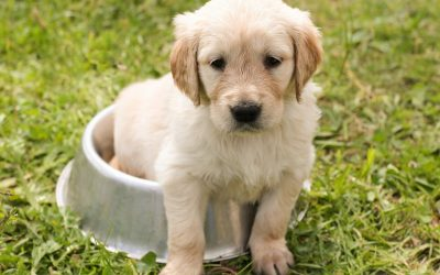 Looking at Pictures of Puppies May Save Your Relationship (No, Really)